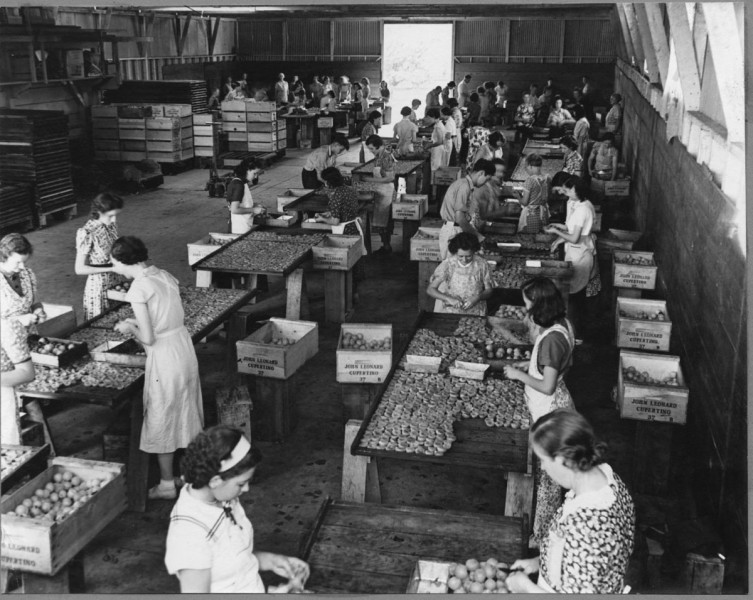 as-the-regions-railway-network-improved-over-time-the-santa-clara-valley-became-the-worlds-largest-center-for-canned-goods-and-fruit-processing