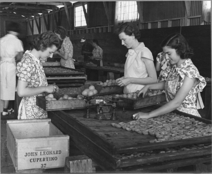 by-1939-the-region-was-home-to-18-canneries-13-dried-fruit-packing-houses-and-12-fresh-fruit-and-vegetable-shipping-firms-including-companies-owned-by-the-leonard-family-and-the-ancestors-of-what-would-eventually-become-del-monte