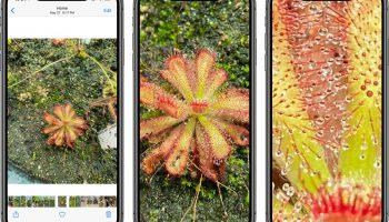 iOS 14 позволяет увеличивать фотографии